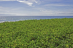 Ground cover with ocean background Stock Photo