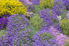 Ground cover plants in spring. Various ground cover plants in spring Royalty Free Stock Image