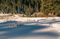 Ground Cover With Snow Near Trees at Daytime stock image