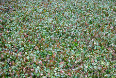 Ground Cover Tecture. Thick plants blanket the grounds of a garden Stock Photos