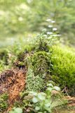 Ground cover vegetation Royalty Free Stock Photo