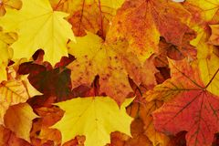 Ground covered with autumn leaves Royalty Free Stock Images