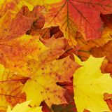 Ground covered with autumn leaves Royalty Free Stock Photo