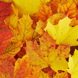 Ground covered with autumn leaves Stock Photos