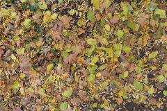 Ground covered with different fallen leaves. In November Royalty Free Stock Image