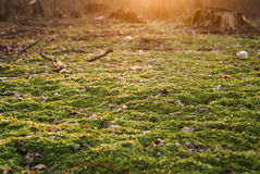 The ground is covered with fresh greenery,  sunshine, Stock Photography