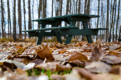 Ground covered golden Autumn Leaves. With picnic table in background Royalty Free Stock Photo
