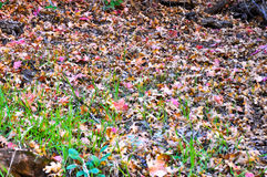 Ground covered with leaves Stock Photo