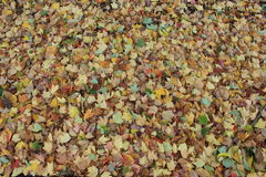 Ground covered with leaves in a park. Bed of colorful leaves on the ground stock photo