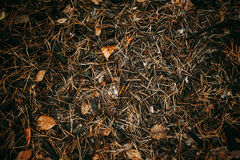 Ground is covered in pine needles, cones and leaves. Autumn texture Royalty Free Stock Photos