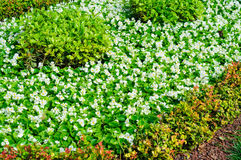 Ground Covering Flowers And Plants Royalty Free Stock Photos