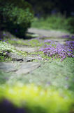 Ground Covering Growth/Flowers royalty free stock photos