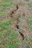 Ground crack grass growing Stock Photos