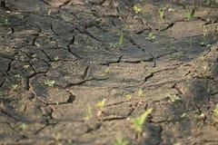 Ground with cracks Stock Image