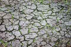 Ground cracks and green grass Royalty Free Stock Photo