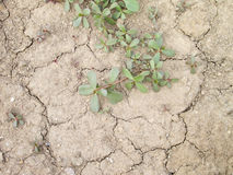 Ground with cracks Stock Photography