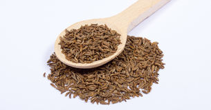 Ground cumin in a spoon. Stock Image