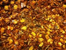 Ground dried chillies Stock Image