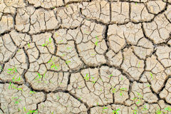 Ground drought Royalty Free Stock Image