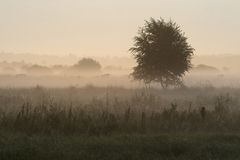 Ground fog. In nature area Dwingelderveld, Netherlands Stock Photos
