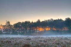 Ground fog on heath Stock Photography
