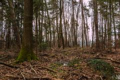 Ground of the forest after a big storm. The ground of the forest after a big storm royalty free stock photography