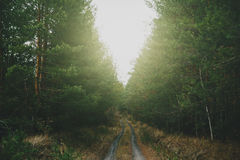 Ground forest road between high green pines trees Royalty Free Stock Image