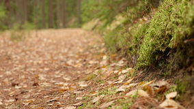 On the Ground of the Forest Trail. Autumn daytime. Smooth dolly shot.  stock footage