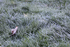 Ground frost in the autumn Stock Image