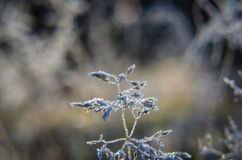 GROUND FROST. Autumn hoarfrost on forest clearing Stock Image