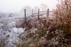 Ground frost on dry grass and fence royalty free stock photos