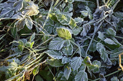 Ground frost Stock Photos