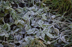 Ground frost Royalty Free Stock Photo