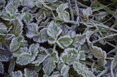 Ground frost Stock Photo