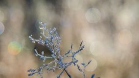 GROUND FROST. Winter hoarfrost on forest clearing Stock Photography