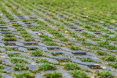 Ground grass and brick. The  green grass on the ground and brick Royalty Free Stock Images