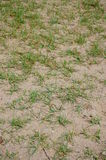 Ground and grass Royalty Free Stock Image