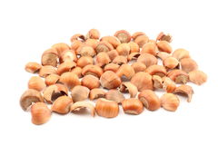 Ground hazelnut shells Royalty Free Stock Photos