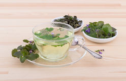 Ground ivy  tea Royalty Free Stock Images
