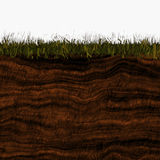 Ground layers. Different layers of earth under grass vector illustration