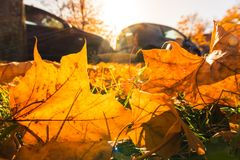 Ground Leaves Fall Autumn Changing Seasons Sun Flare Outdors Day Royalty Free Stock Photo