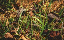 Autumn in the Grass Stock Photography