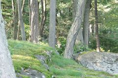 Ground Level Forest View Royalty Free Stock Images