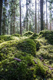 Ground level in a mossy forest Royalty Free Stock Photography