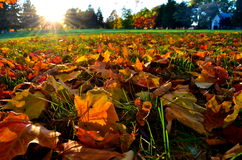Ground level sundown in the fall Royalty Free Stock Photo