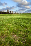 Park & Buildings. Ground level view of green grassy hill at a park, with a line of dark green trees bordering the park from the concrete urban scenery, on Stock Image