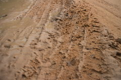 Ground level view horizontal MCU muddy jungle road with fresh vehicle track Royalty Free Stock Photos