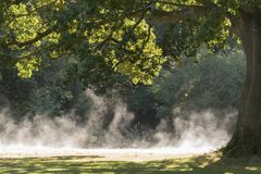 Morning mist rising on Southampton Common Royalty Free Stock Images