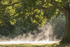 Morning mist rising on Southampton Common Royalty Free Stock Photos