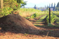 Ground Mulch for Berries Royalty Free Stock Photos